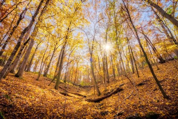 Widok Robaka Z Oka Przedstawiający Rozbłysk Słońca Przez Jesienne Drzewa Na Zboczu Góry Darmowe Zdjęcia