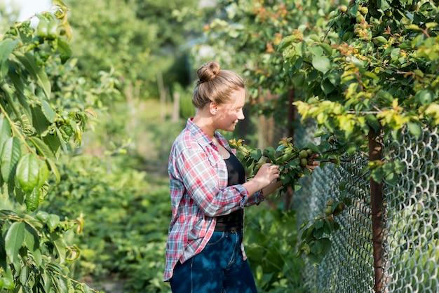 Widok Z Boku Dziewczyna Zbieranie Owoców Darmowe Zdjęcia