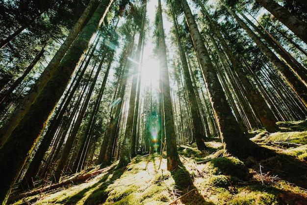 Widok z dołu grupy drzew Darmowe Zdjęcia
