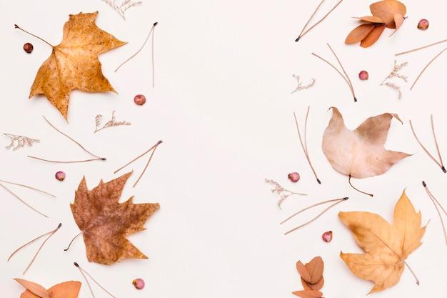 Widok Z Góry Asortymentu Jesiennych Roślin I Liści Premium Zdjęcia