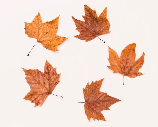 Widok Z Góry Asortymentu Liści Jesienią Premium Zdjęcia