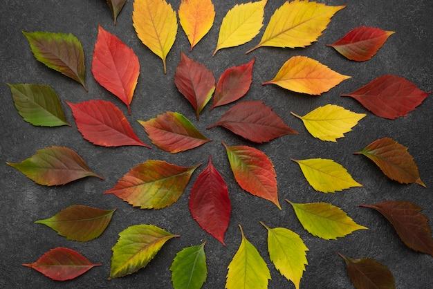 Widok Z Góry Koncentrycznych Liści Jesienią Darmowe Zdjęcia