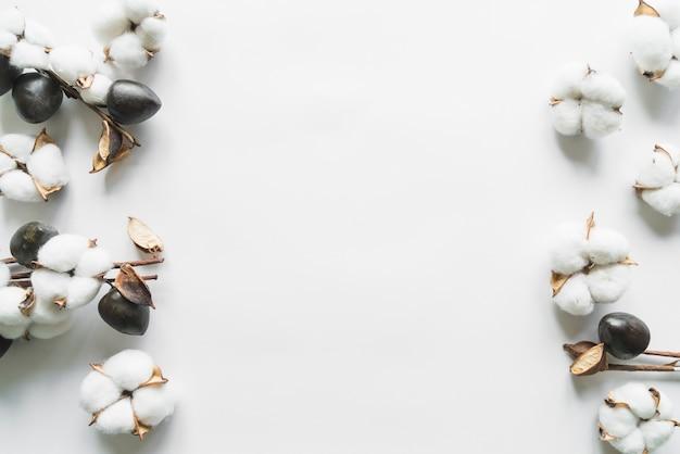 Widok Z Góry Kwiatów Bawełny Darmowe Zdjęcia