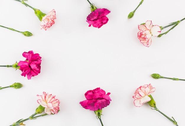 Widok Z Góry Kwiatów Goździka Darmowe Zdjęcia