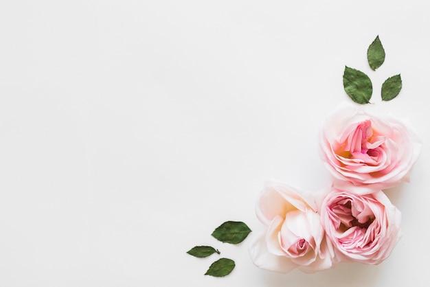 Widok Z Góry Kwiatów I Liści Darmowe Zdjęcia