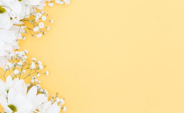Widok Z Góry Kwiatowy Ramki Z Białymi Stokrotkami Darmowe Zdjęcia
