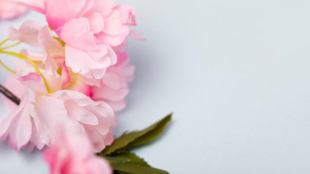 Widok Z Góry Kwitnących Kwiatów Z Miejsce Darmowe Zdjęcia