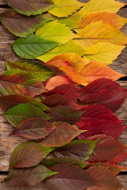 Widok Z Góry Na Pięknie Kolorowe Jesienne Liście Darmowe Zdjęcia