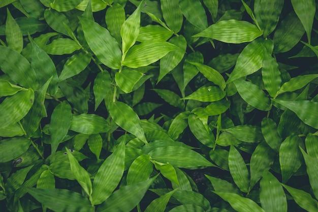 Widok Z Góry Na Zielone Rośliny Rosnące W Tle Darmowe Zdjęcia