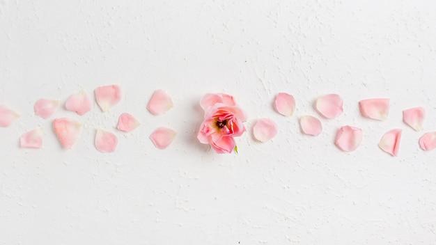 Widok Z Góry Pięknej Wiosennej Róży Z Płatkami Darmowe Zdjęcia