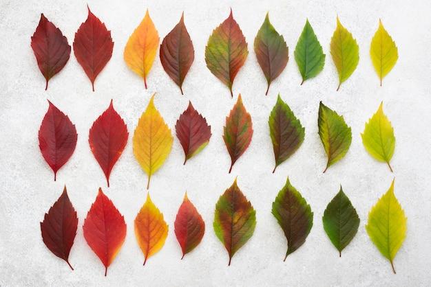 Widok Z Góry Pięknych Kolorowych Liści Jesienią Darmowe Zdjęcia