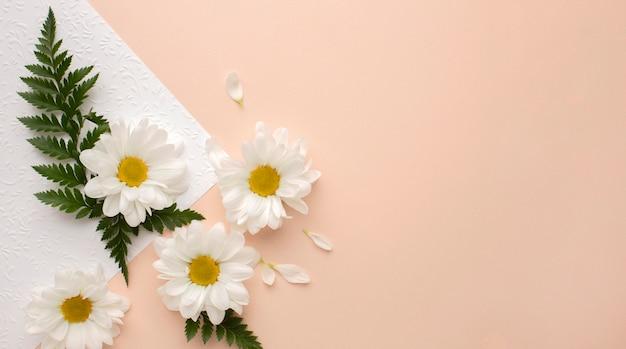 Widok Z Góry Płatki Kwiatów Na Kartce Papieru Darmowe Zdjęcia