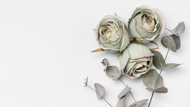 Widok Z Góry Róż Z Miejsca Kopiowania Premium Zdjęcia