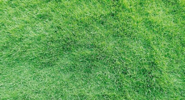 Widok z góry tekstura trawa Premium Zdjęcia