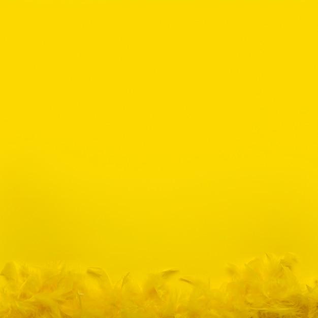 Widok Z Góry żółte Boa Z Piór Z Miejsca Kopiowania Darmowe Zdjęcia