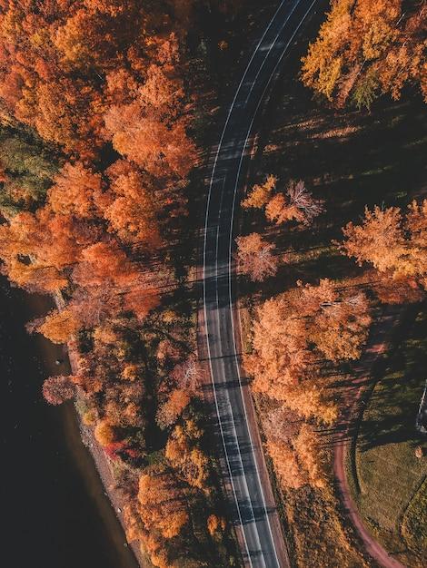 Widok z lotu ptaka droga w pięknym jesień lesie. piękny krajobraz z pustą wiejską drogą, drzewa z czerwonymi i pomarańczowymi liśćmi. autostrada przez park. widok z latającego drona. rosja, sankt petersburg Premium Zdjęcia