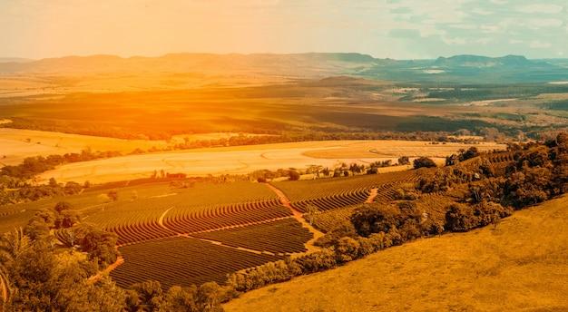 Widok z lotu ptaka kawowy rolny pole Premium Zdjęcia