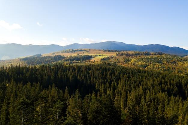Widok Z Lotu Ptaka Na Jasnozielony świerk I żółte Jesienne Drzewa W Jesiennym Lesie I Odległych Wysokich Górach Premium Zdjęcia