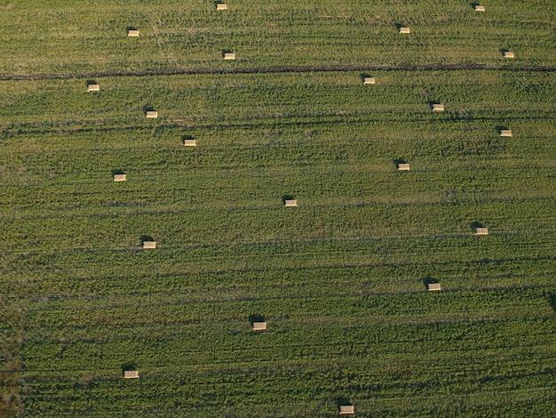 Widok Z Lotu Ptaka Na Sterach Siana Na Polu Pszenicy Pod Niebem. Pole Ambrozji. Fotografia Dronem. Premium Zdjęcia