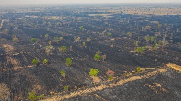 Widok Z Lotu Ptaka Nad Płonącym Ryżu Polem Po żniwa Premium Zdjęcia