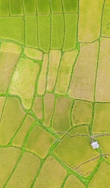 Widok Z Lotu Ptaka Zielonego I żółtego Ryżu Pola Krajobrazu Różny Wzór Przy Rankiem W Północnym Thailand Premium Zdjęcia
