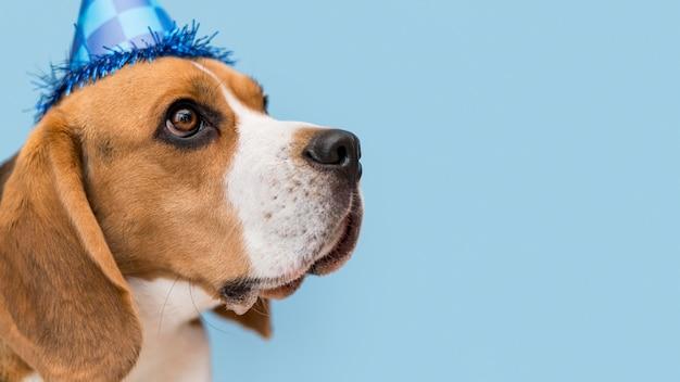 Widok Z Przodu Koncepcji śmieszne ładny Pies Darmowe Zdjęcia