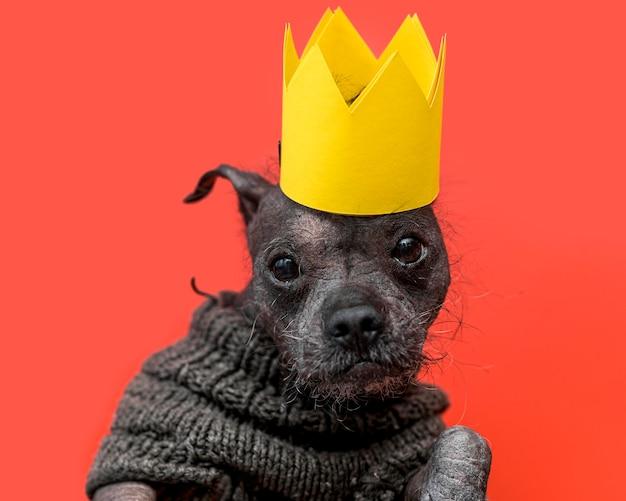 Widok Z Przodu Koncepcji śmieszne ładny Pies Premium Zdjęcia