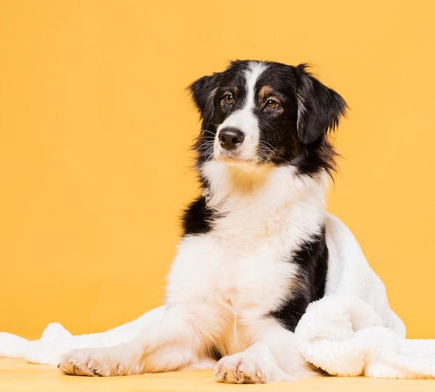 Widok Z Przodu ładny Pies Siedzi Darmowe Zdjęcia