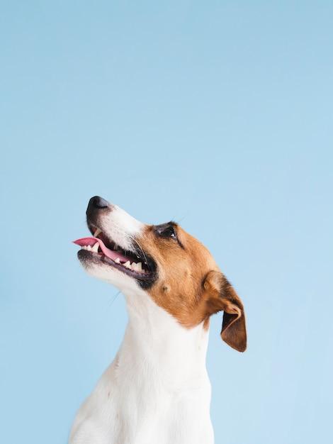 Widok Z Przodu ładny Pies Z Podniesioną Głową Premium Zdjęcia