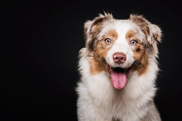 Widok Z Przodu ładny Pies Premium Zdjęcia