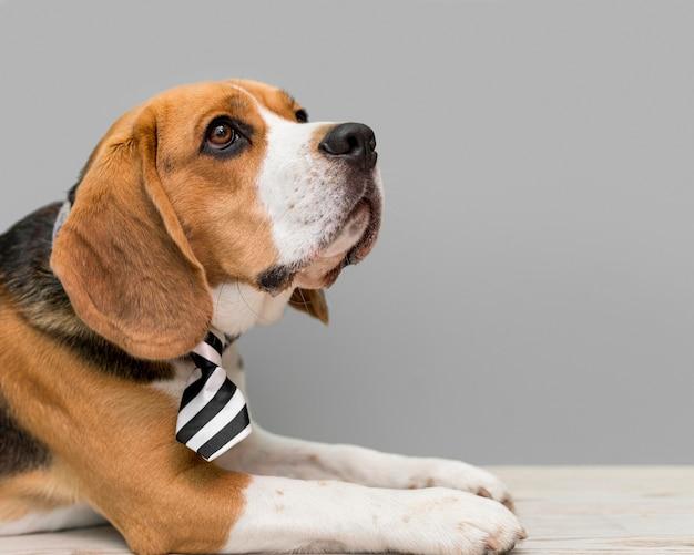Widok Z Przodu Pięknego Psa Z Miejsca Na Kopię Darmowe Zdjęcia