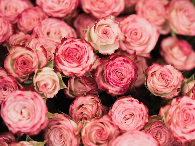 Widok Z Przodu Romantycznych Róż Darmowe Zdjęcia