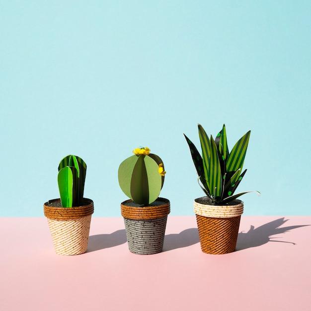 Widok Z Przodu Rozmieszczenie Kaktusów Z Miejsca Kopiowania Darmowe Zdjęcia