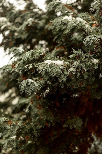 Widok Z Przodu Zielony Krzew Ze śniegiem Darmowe Zdjęcia