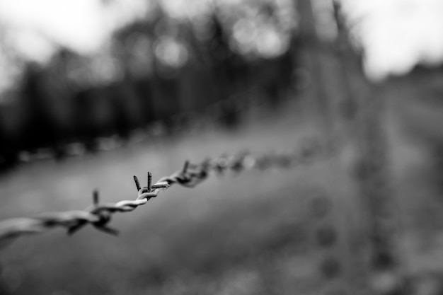Widok Zbliżenie Ogrodzenia Z Drutu Kolczastego, Niemiecki Obóz Koncentracyjny Auschwitz Ii Premium Zdjęcia
