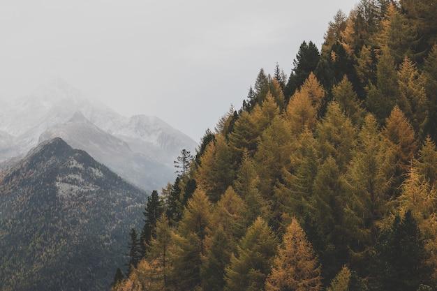 Widok Zielonych Drzew Darmowe Zdjęcia