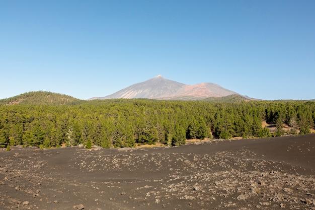 Wiecznozielony Las Z Górą Na Tle Darmowe Zdjęcia
