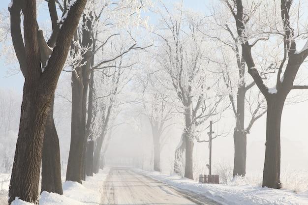 Wiejska Droga Wśród Matowych Klonów W Zimowy Poranek Premium Zdjęcia