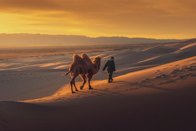 Wielbłąd Iść Przez Wydm Na Wschodzie Słońca, Gobi Pustynia Mongolia. Premium Zdjęcia