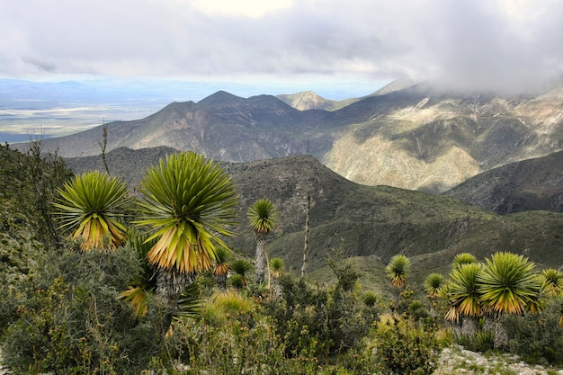 Wiele Zielonych Plantacji Palm Karłowatych Pod Pięknym Zachmurzonym Niebem Darmowe Zdjęcia