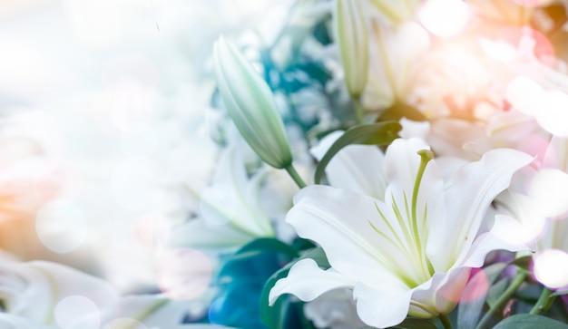 Wielkanocna Lilia Lilium Longiflorum. Premium Zdjęcia