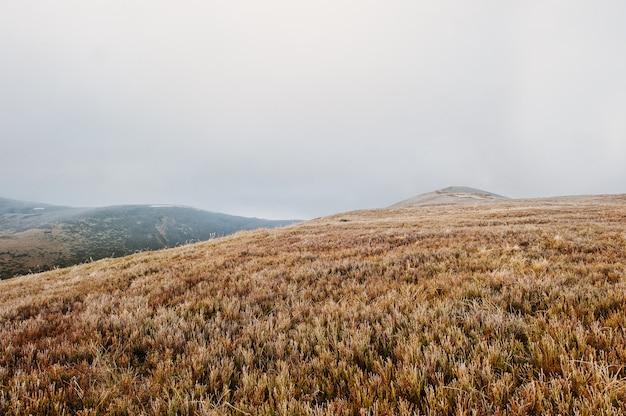 Wielkie wzgórza o zamarzniętym poranku na mgle w karpatach Premium Zdjęcia