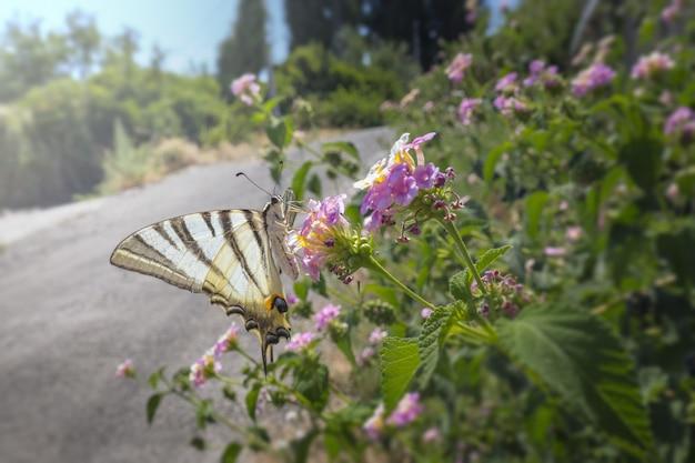 Wielobarwny Motyl Siedzi Na Kwiatku Darmowe Zdjęcia