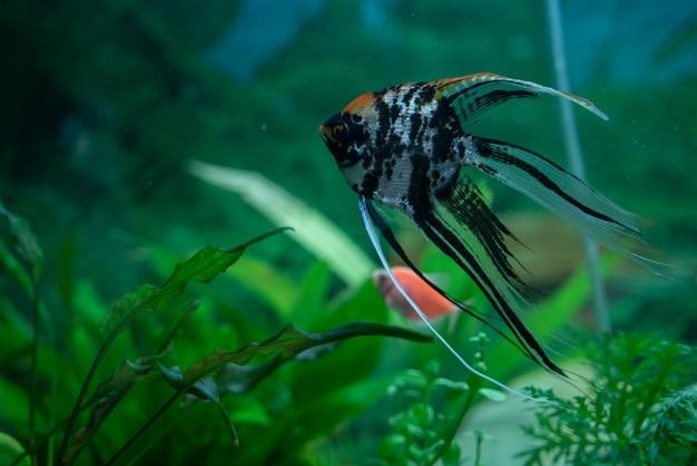 Wielobarwny Ryb W Akwarium Premium Zdjęcia