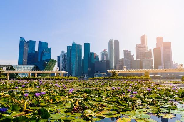 Wieżowce i staw lotosu. Premium Zdjęcia