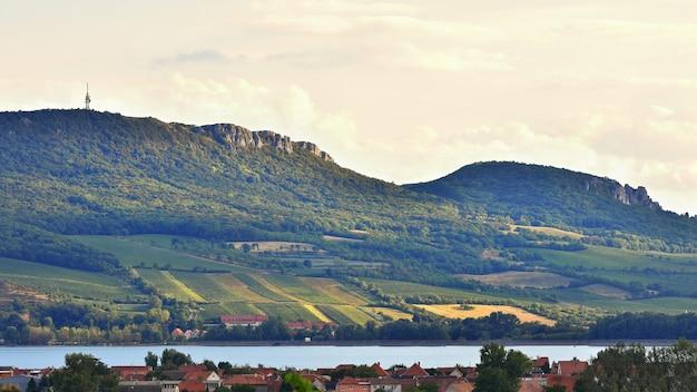 Winnic Przy Zmierzchem W Jesieni żniwie. Winogrona Dojrzałe.wine Region, Morawy Południowe - Czechy. V Darmowe Zdjęcia
