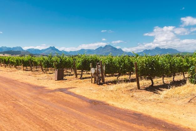 Winnica I Góry W Miasteczku Franschhoek W Południowej Afryce Premium Zdjęcia