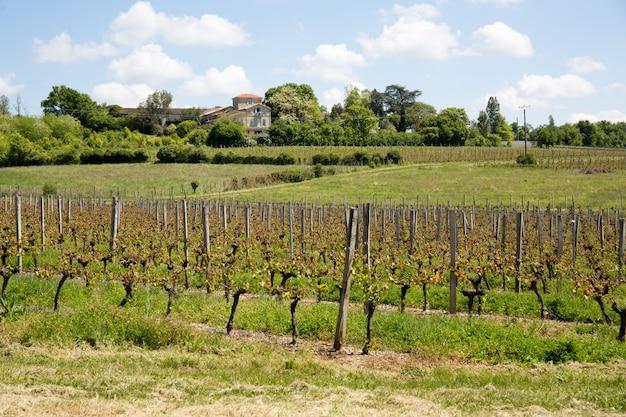 Winnice W Regionie Bordeaux Wiosną Premium Zdjęcia