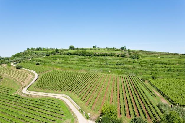 Winnice Z Soave, Słynnego Obszaru Winiarskiego. Premium Zdjęcia