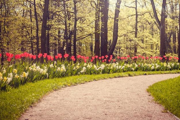 Wiosenne Kwiaty Czerwone Tulipany. Piękne Czerwone Kwiaty. Premium Zdjęcia